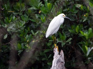 a bird sits on a branch in a Sanibel Island golf course