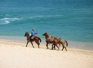 horseback riders stroll down the beach in cabo san lucas