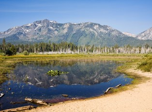 a small pond in the expansive national forests of the Lake Tahoe area