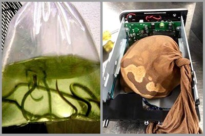 40 Most Out-of-the-Box Things Seized by the TSA