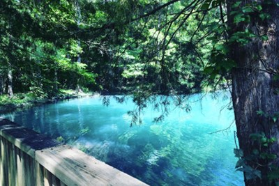 A view of Blue Hole Spring at Florida Caverns.