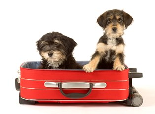 two dogs are ready travel as they sit in a suitcase
