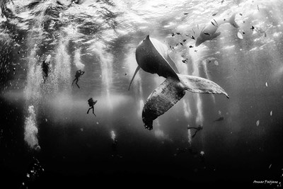 Anuar Patjane Floriuk won the grand prize for his photograph Whale Whisperers in the National Geographic Traveler photo contest.
