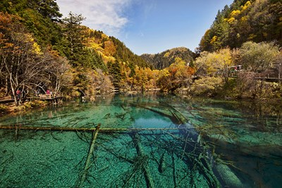 The pristine wildlife of Jiuzhaigou is threatened by human encroachment.