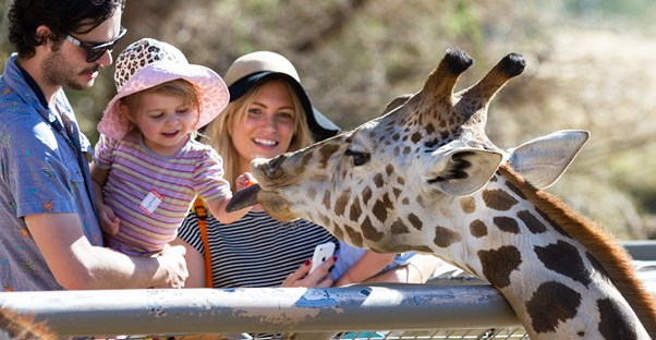 Family feeding a giraffe at the zoo