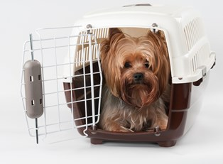 a dog sits in his kennel awaiting travel