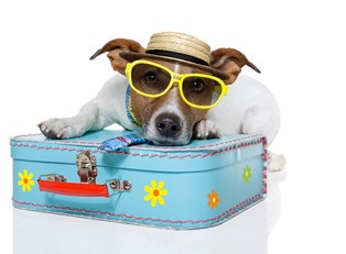 a dog dressed for a beach vacation with sunglasses sits on a suitcase